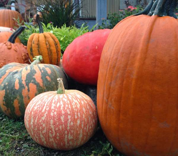 Exotic Pumpkins